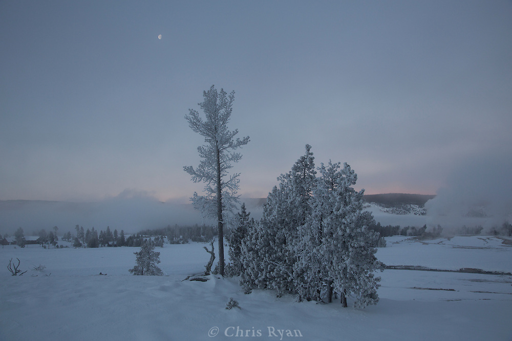 Frosted trees and low-hanging steam from Old Faithful Geyser before dawn, Yellowstone National Park