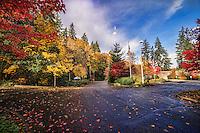 Autumn in Eastgate Park, Bellevue
