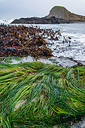 Seagrass and kelp near Seal Rock State Recreation Site, Oregon coast, USA. We stayed at the adjacent Seal Rocks RV Cove.