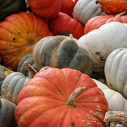 Multiple, colorful gourds and squash ready for use as decorative autumn displays.