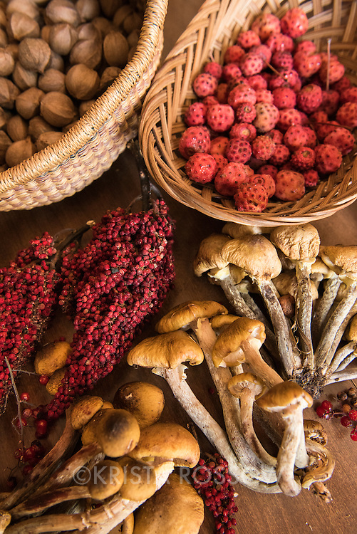 """Spread of foraged food on the kitchen table of local """"mushroom man"""" Alan Muskat in the suburbs of Asheville, North Carolina. Foraged items include: kousa dogwood berries, hickory nuts, sumac, and wild honey mushrooms."""