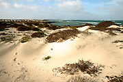 The dunes in the northern part of Maio island form a delicate ecosystem. Praia Real (Royal beach) is said to be a shark dormitory.
