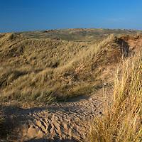 Europe, United Kingdom, Wales, Pembrokeshire. Dunes of Freshwater West Beach, Pembrokeshire, Wales.