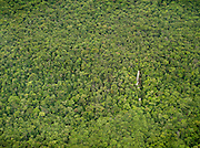A small waterfall hidden deep inside the dense jungle of Canaima National Park in Venezuela