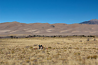 Great Sand Dunes National Park. Panorama (4 of 7). Image taken with a Nikon D2xs camera and 17-35 mm f/2.8 zoom lens (ISO 100, 35 mm, f/11, 1/125 sec).