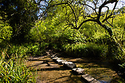 Stepping stones through a stream heading into the woods in St Catherine's, Jersey, CI