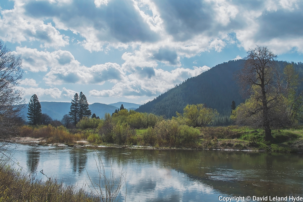 Indian Creek, Cumulus Clouds, Partly Cloudy Sky, Willows, Alders, Cottonwoods, Ponderosa Pine, Genesee Valley Ranch, California Mountains, Sierra Nevada Mountains, Spring