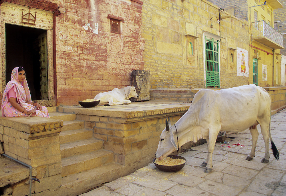 Asia, India, Rajasthan, Jaisalmer, Hindu woman wearing sari on porch of sandstone house near sacred cows