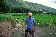 Taro Farmer, Waipio Valley, Island of Hawaii, (editorial use only, no model release)<br />
