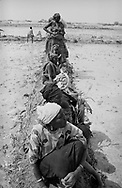 MALI. Tondiby. 3/02/1987: Women taking a break when replanting rice in the irrigated perimeters of a cooperative managing a potential of 30ha.