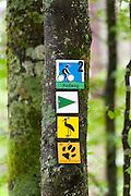 Wanderwegmarkierungen, Zwieseler Waldhaus, Bayerischer Wald, Bayern, Deutschland | hiking track signs, Zwieseler Waldhaus, Bavarian Forest, Bavaria, Germany