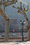 plane trees along the river tain l hermitage rhone france