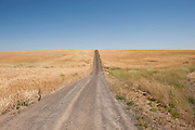 A dirt roads cuts its way through the wheat fields of eastern Washington State.
