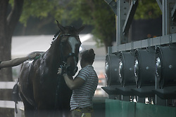 Horse care<br /> Olympic Games Hong Kong 2008<br /> Photo © Dirk Caremans - Hippo Foto