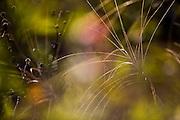 Nova Lima_MG, Brasil...Flora do condominio Pasargada em Nova Lima, Minas Gerais...The flora in Pasargada condominium in Nova Lima, Minas Gerais...Foto: JOAO MARCOS ROSA / NITRO