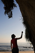 A young woman admires plants growing at a spring where water seeps from the cliff overlooking Laguna Beach, California.