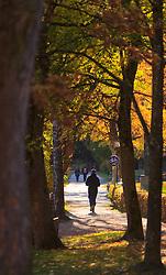 THEMENBILD - ein Freizeitsportler an einem sonnigen Herbsttag, aufgenommen am 21. Oktober 2015, Zell am See, Österreich // a man running on a sunny Autumn Day, Zell am See, Austria on 2015/10/21. EXPA Pictures © 2015, PhotoCredit: EXPA/ JFK