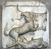 One of the Metopes (Tablet with relief sculpture) from the Parthenon, Athens. made from marble. Depicting a battle between Lapiths and Centaurs.
