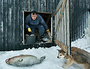 After feeding his sled dogs, Bent Igniatiussen is stashing seal meat in his basement, for his family. Life in and around the small Inuit settlement of Isortoq (population of 64), in East Greenland.