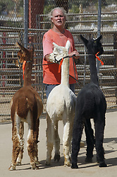 July 6, 2018 - Lakeside, CA, USA - Alpine, Calif., resident John Robillard leads his alpacas at the Lakeside Rodeo, which has been set up as a shelter for large animals being evacuated from the West fire, in Lakeside on Friday, July 6, 2018. (Credit Image: © Hayne Palmour Iv/TNS via ZUMA Wire)