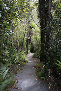 Wellington New Zealand, Dry Creek Quarry Lord of The Rings filming location. Rivendell, city of the elves