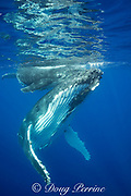 humpback whale, Megaptera novaeangliae, and calf, resting, Vava'u, Kingdom of Tonga, South Pacific; both mother and baby have remoras, or sharksuckers attached to underside