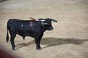 a bull with spikes in his back
