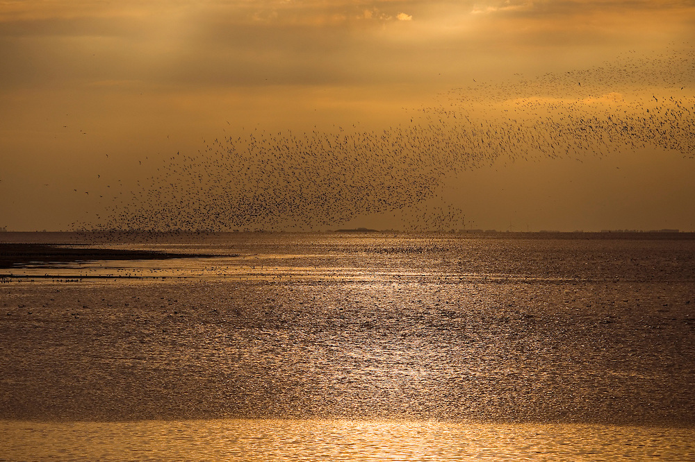 Waders On Mudflats, The Wash