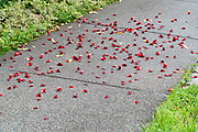 concrete path with red flower petals