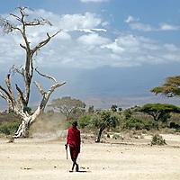 Africa, Kenya, Amboseli. A lone Maasai man at Amboseli, with Mt. Kilimanjaro in distance.