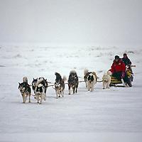 Franklin Bay, Beaufort. A dogsled team threads through pressure ridges.