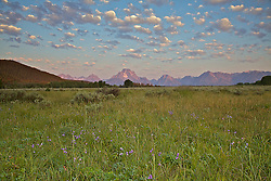 """Wildflowers, puffy clouds, Grand Tetons<br /> <br /> For production prints or stock photos click the Purchase Print/License Photo Button in upper Right; for Fine Art """"Custom Prints"""" contact Daryl - 208-709-3250 or dh@greater-yellowstone.com"""