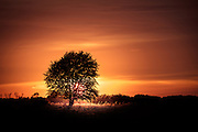 Tree and Sunset - Birkum, Fyn, Denmark