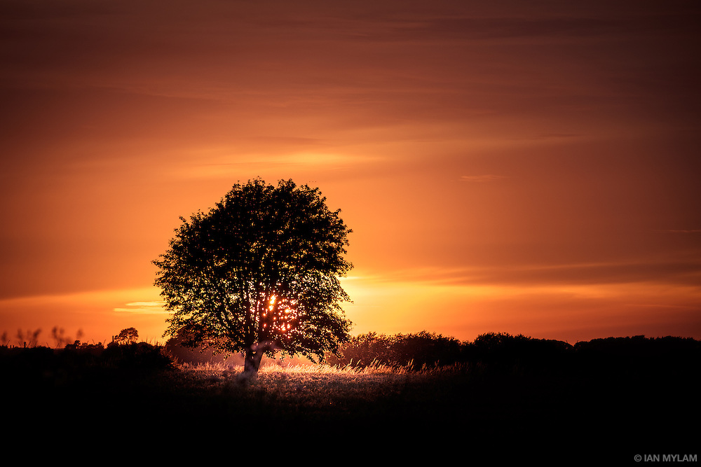 Tree and Sunset - Birkum, Fyn, Denmark
