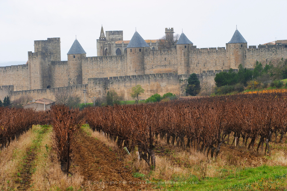Carcassonne. Languedoc. View over the old city. Vines trained in Guyot cane pruning. A rainy and misty winter day. France. Europe. Vineyard.