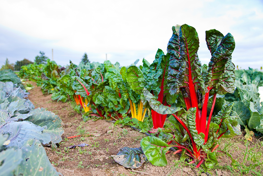 Meriwether's Restaurant is  one of the few restaurants operating their own 5 acre vegetable farm on Skyline Blvd. in NW Portland.  Throughout the 2009 harvest, the restaurant has served over 8000 pounds of Skyline Farm produce.