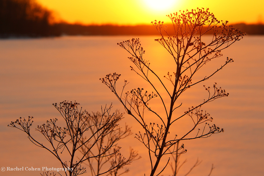 """""""Sun's Going Down on Me""""<br /> <br /> A wonderful winter sunset image. As if this plant, basking in the sun on a cold winter's day is saying.<br /> Don't let the sun go down on me!!<br /> <br /> Sunset Images by Rachel Cohen"""