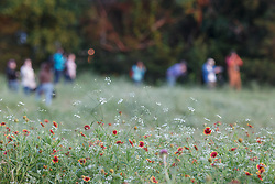 Photographers and wildflowers at sunset, Big Spring, Great Trinity Forest, Dallas, Texas, USA