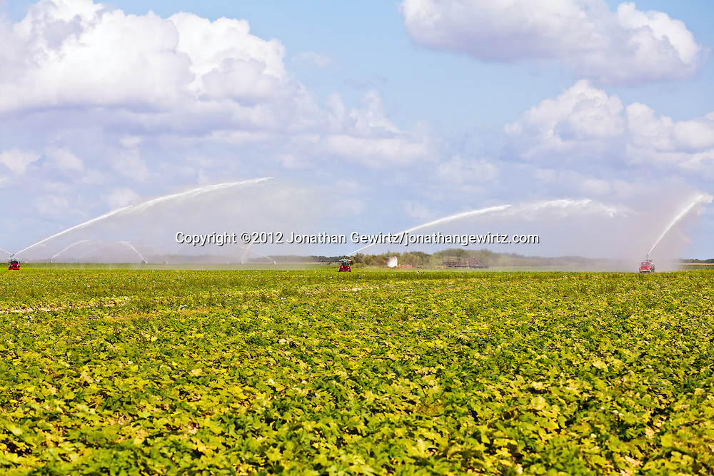 Truck-mounted water pumps irrigate vegetable fields near Homestead, Florida. WATERMARKS WILL NOT APPEAR ON PRINTS OR LICENSED IMAGES.