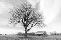 https://Duncan.co/tree-and-barn-black-and-white