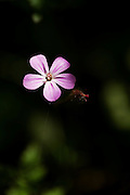 A single forget-me-not flower, lit by the sun coming through the woodland canopy, with selective focus.