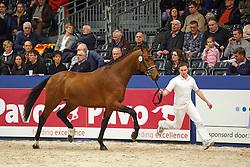 382 - Giovanni NB<br /> KWPN Stallion Selection - 's Hertogenbosch 2014<br /> © Dirk Caremans