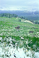 A July snow storm over the Beartooth Mountains of Wyoming.  Looking down into the Clarks Fork Yellowstone Valley and the Absaroka Mountains.