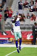Dallas Cowboys rookie wide receiver Noah Brown (85) leaps and catches a pass warming up before the 2017 NFL week 3 regular season football game against the Arizona Cardinals, Monday, Sept. 25, 2017 in Glendale, Ariz. The Cowboys won the game 28-17. (©Paul Anthony Spinelli)