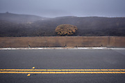 Remnants of the Meyers Fire could be seen along California's Highway One in Sonoma County after being closed for a week due to a natural caused lightning fire that burned from Meyers Grade down to the Pacific Ocean North of Jenner.