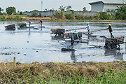 "15 NOVEMBER 2012 - PATHUM THANI, PATHUM THANI, THAILAND:  Farm workers near Pathum Thani aerate a field before planting rice in it. This part of Thailand usually gets at least two rice crops a year out of the land. The Thai government under Prime Minister Yingluck Shinawatra has launched an expansive price support ""scheme"" for rice farmers. The government is buying rice from farmers and warehousing it until world rice prices increase. Rice farmers, the backbone of rural Thailand, like the plan, but exporters do not because they are afraid Thailand is losing its position as the world's #1 rice exporter to Vietnam, which has significantly improved the quality and quantity of its rice. India is also exporting more and more of its rice. The stockpiling of rice is also leading to a shortage of suitable warehouse space. The Prime Minister and her government face a censure debate and possible no confidence vote later this month that could end the scheme or bring down the government.   PHOTO BY JACK KURTZ"