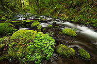 Rocks covered by moss and other plants abound along Gorton Creek in the Columbia River Gorge of Oregon.