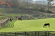 Otisville, New York - Horses graze in a field at Hidden Lake Farm on March 25, 2012.
