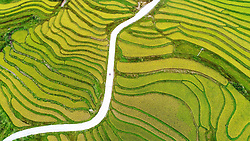 September 21, 2017 - Longli, Guizhou, China - An aerial view showing a lone person walking down the road in between the intricate patterns of the terraced fields in Longli, southwest China's Guizhou Province. (Credit Image: © SIPA Asia via ZUMA Wire)