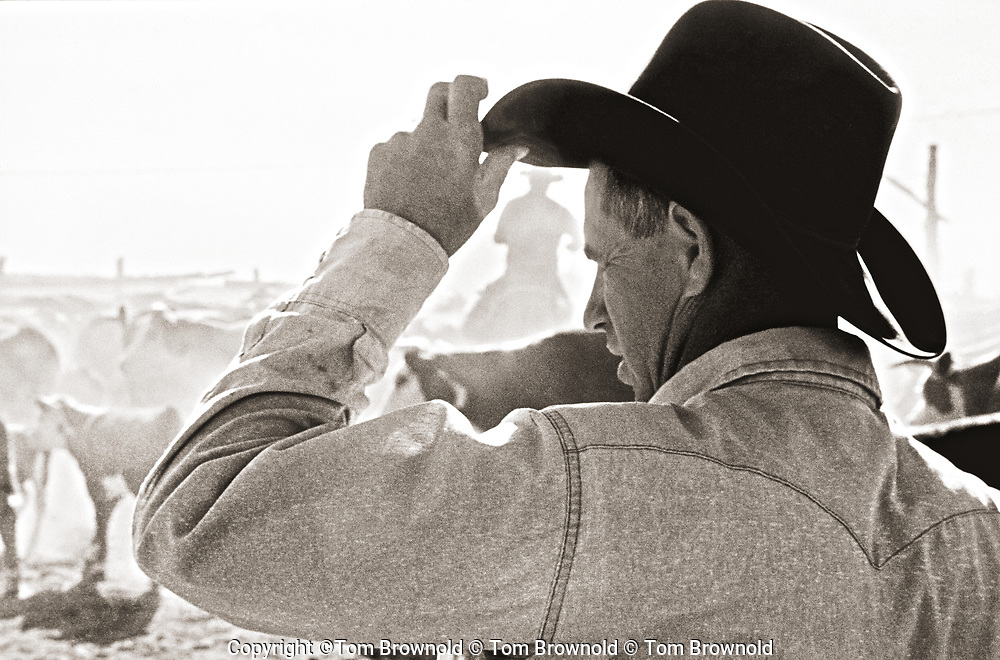 The ranch foreman counting inventory
